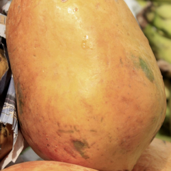 papaya ingredient