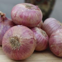 onion ingredient