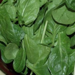 Spinach ingredient