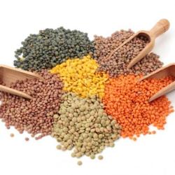 lentils ingredient